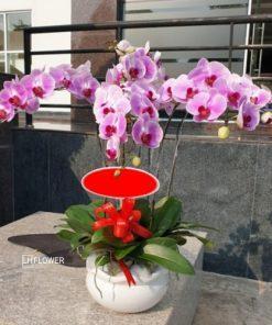 Tân Phú Quý